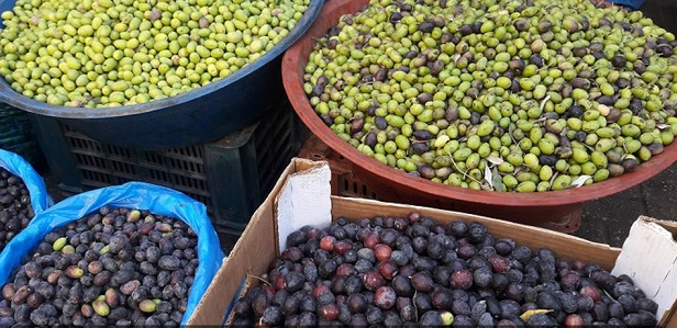 Olive market in Khan Younis