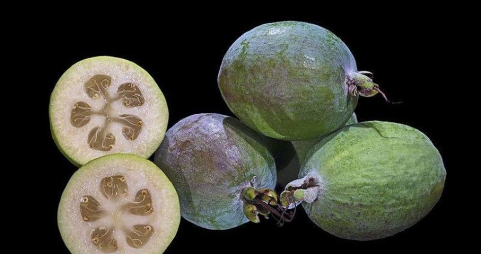 Feijoa, tropical fruit grown in Gaza