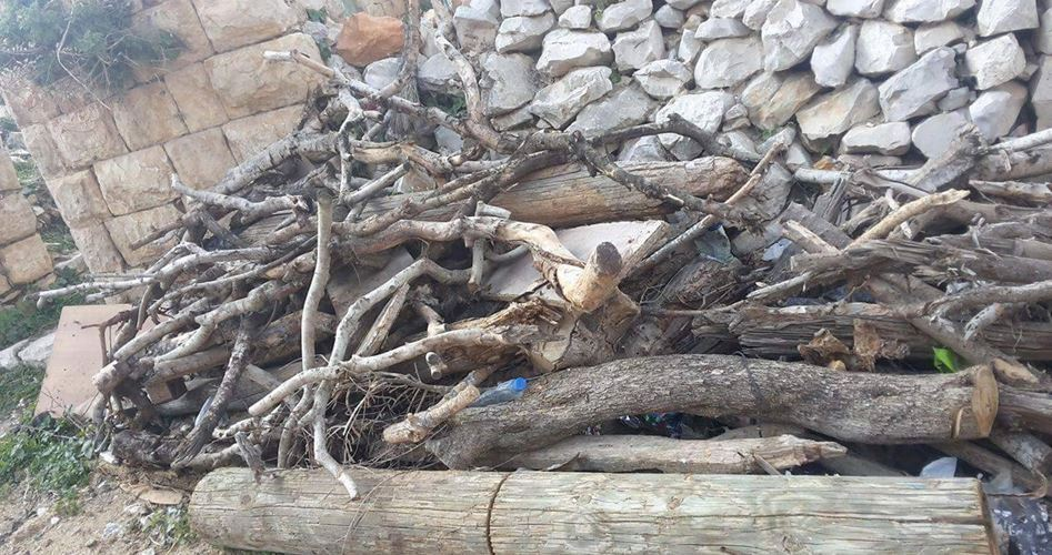 Firewood in winter: Warming bodies at lower cost