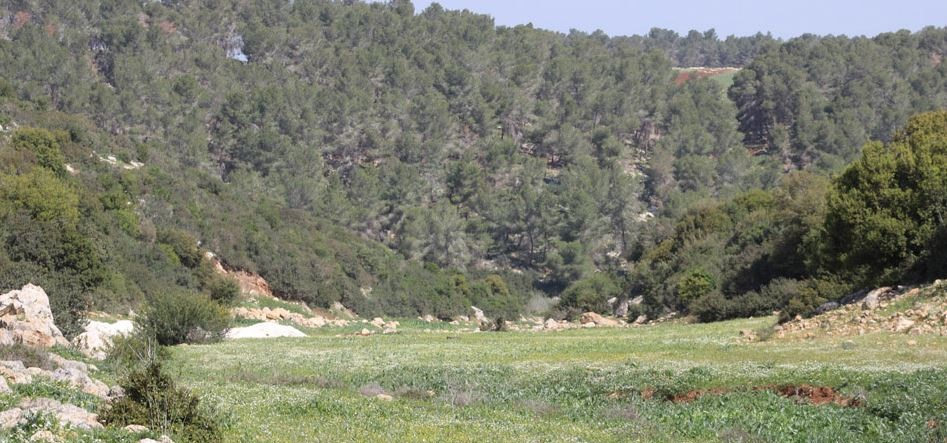 An ecological site and a forest
